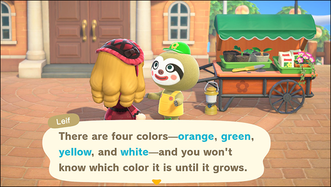 anch leif pumpkin colors